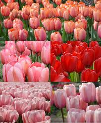 discounted collections flower bulb index
