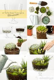 16 diy home decor ideas trifle bowl terrarium succulents home