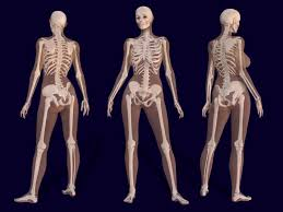 Study Anatomy And Physiology Online Bones Human Anatomy Female Learn Anatomy Physiology Online