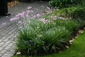 the garden of medicinal plants
