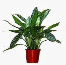 house plants that don t need light indoor plants that do not need much light garden park