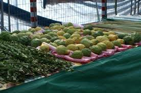 lulav and etrog for sale the etrog lulav and hadas for sale photo huffington post why