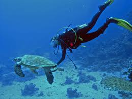 daily things you can do to save marine life live eco