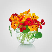 Flowers In A Vase Images Beautiful Bouquet Of Nasturtium Flowers In A Vase Tropaeolum