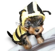 dog costume wizard of oz bee dog sweater bumble bee dog costume coat
