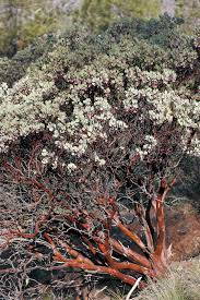 native plants of pacific northwest pacific horticulture society arctostaphylos for pacific
