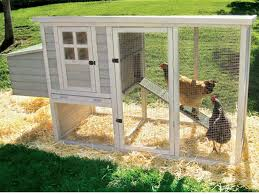 How To Build A Tent How To Build A Chicken Coop U2014 A Step By Step Guide On How You Can