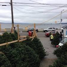 son in law christmas tree farm closed christmas trees 2530