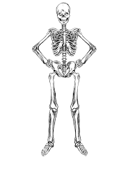 human skeleton coloring page virtren com