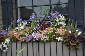 watering containers dirt simple