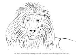 learn how to draw a lion u0027s face big cats step by step drawing