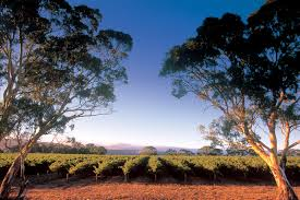 wine review a hardy chardonnay the adelaide review