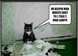 Lawyer Cat Meme - i plead the 5th symphony lolcats lol cat memes funny cats
