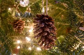 charming christmas tree shop christmas trees part 7 family
