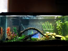 design entrancing half round pink 55 gallon fish tank for sale