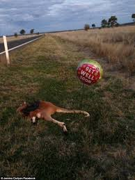 Soon Horse Meme - morbid prankster attaches get well soon balloons to more than 20