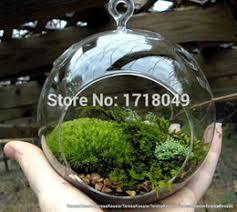 Indoor Garden Supplies - discount pots for indoor plants decoration 2017 pots for indoor