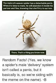Spider Meme - 25 best memes about orb weaver spider orb weaver spider memes