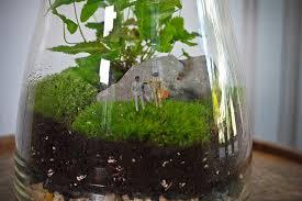 eight oaks terrariums