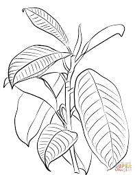 indian rubber tree ficus elastica coloring page free printable