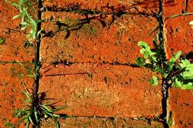 How To Remove Weeds From Patio Preventing And Killing Weeds Between Bricks Thriftyfun