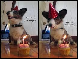 100 ultimate funny happy birthday meme u0027s my happy birthday wishes