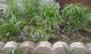 native plants of wisconsin landscaping with native plants in ripon wisconsin improved