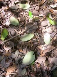 floor plant plant litter wikipedia