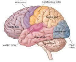Brain Mapping Muse A Brain Sensing Wearable Guided Meditation Headband
