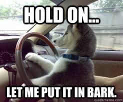 Dog Driving Meme - dog driver meme have no idea what i m doing driving dog