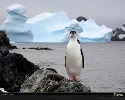it u0027s world penguin day cityseed blog