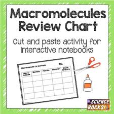 macromolecules review chart for inb by science rocks tpt