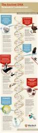 26 best dna science images on pinterest ap biology life science