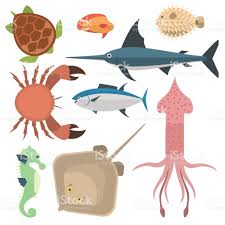vector sea animals creatures characters cartoon ocean underwater