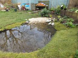 Frog Pond Backyard Wildlife Pond Without Liner Gardening Forum Gardenersworld Com