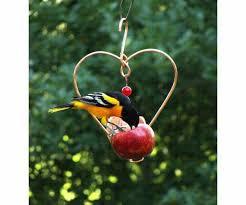 best 25 oriole bird feeders ideas on bird feeder