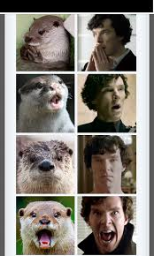 Benedict Cumberbatch Otter Meme - hi i arived late to sherlock can someone explain the otter