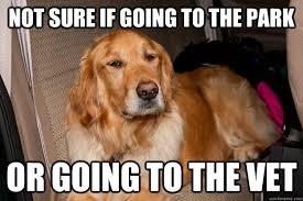Dog At Vet Meme - skeptical dog memes quickmeme