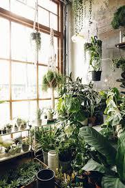 best 25 plant decor ideas on pinterest house plants plants for room best 25 bedroom plants ideas on pinterest bedroom