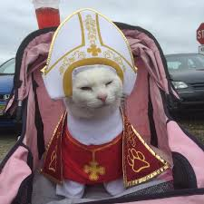 Halloween Costume Cat Cats Wear Halloween Costumes Baxterboo