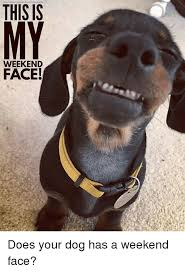 Weekend Dog Meme - thisis my weekend face does your dog has a weekend face meme on