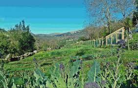 Natural Pesticides For Vegetable Gardens by The Vegetable Garden Hotel Posada Del Valle