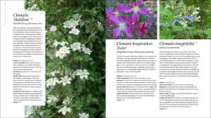 the plant lover u0027s guide to clematis the plant lover u0027s guides