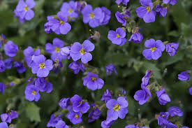 fiori viola cuscino fiori viola 盞 foto gratis su pixabay