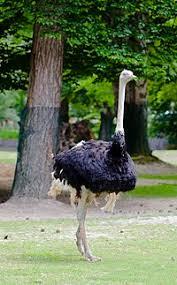 flightless bird wikipedia