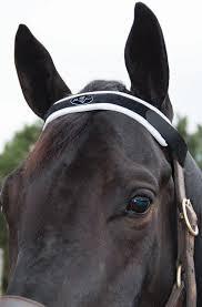 67 best equine attire images on pinterest horse tack horse