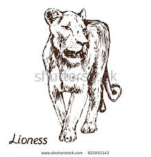 lion lioness lion cub family hand stock vector 620805062