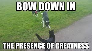 Bow Down Meme - bow down in the presence of greatness rolothecat meme generator