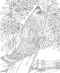 animal coloring pages for adults bird coloringstar
