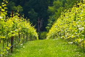 Virginia Wineries Map by Blue Ridge Wine Excursions